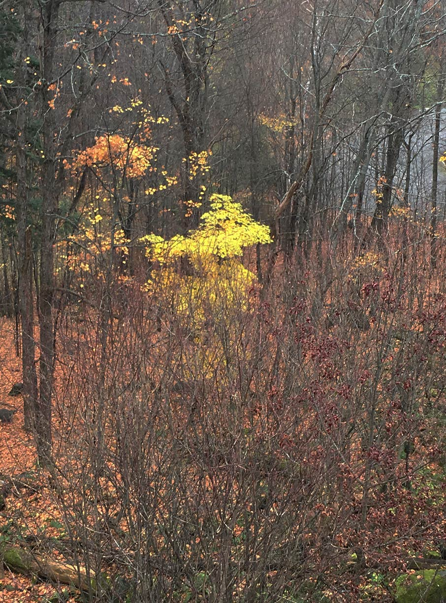 Autumn-trees-with-no-leaves-in-Muskoka-woods-near-cottage-
