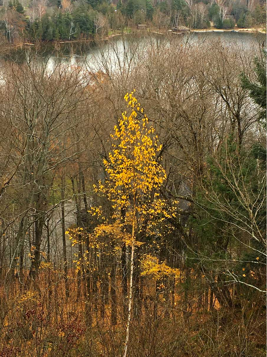 Muskoka-lake-in-the-fall-with-yellow-tree-in-foreground