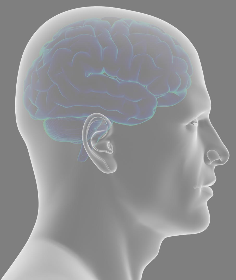 Side-view-of-human-head-with-brain-inside