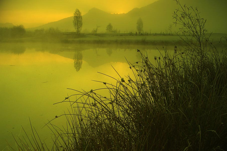 Greenish-yellow-environment-lake-grass-and-land-in-background