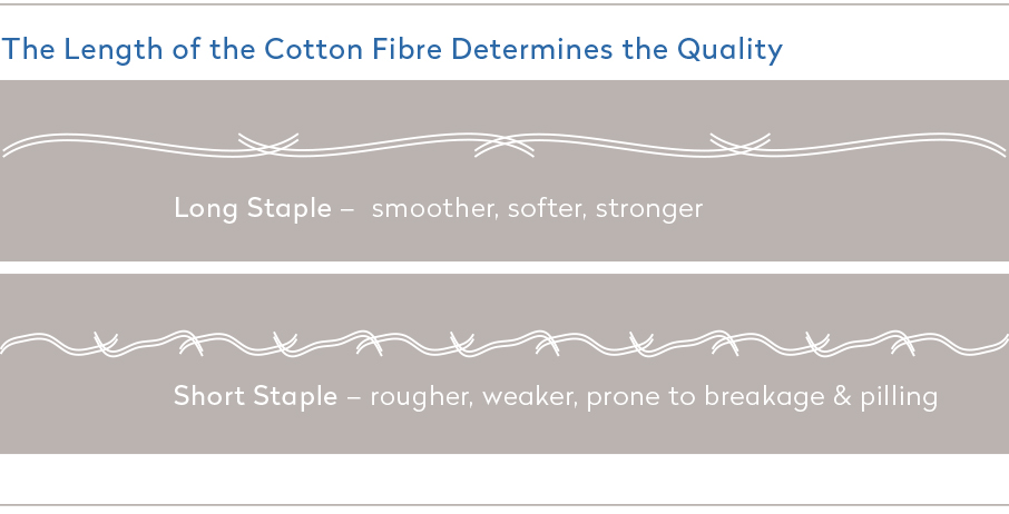 Length-of-cotton-fibre-determines-quality