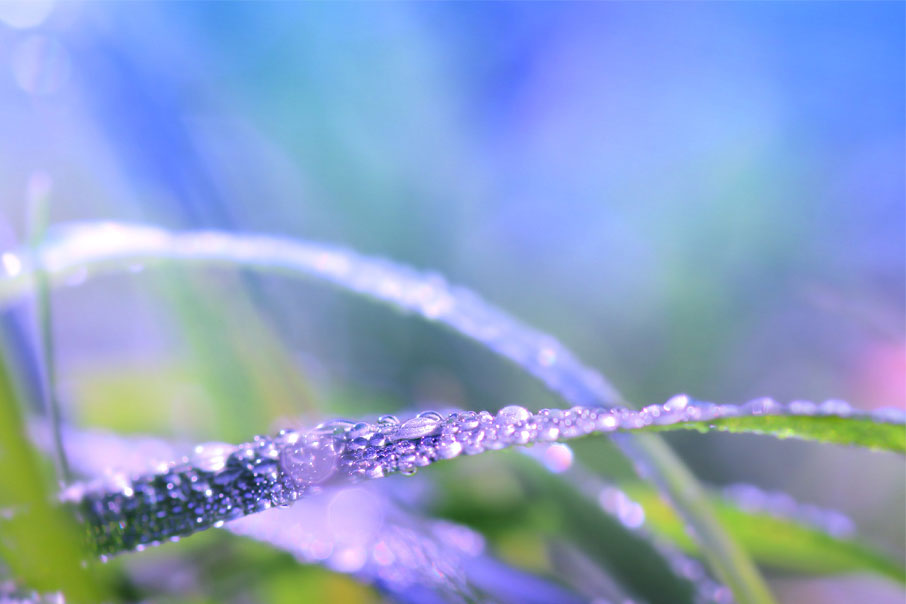 Macro-grass-blade-with-dew-drops-colourful