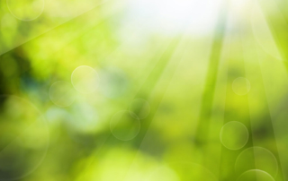 Out-of-focus-sunlight-beaming-through-green-trees