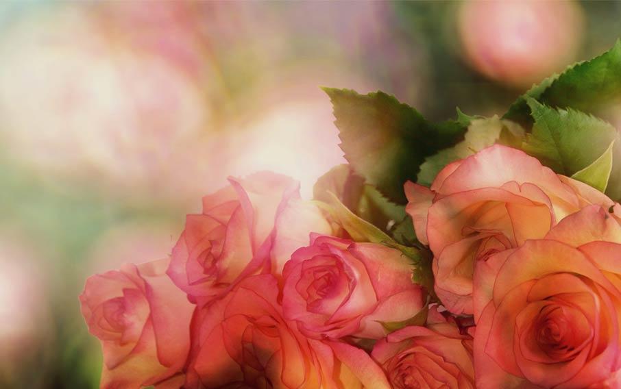 ZayZay Living valentine soft pink roses